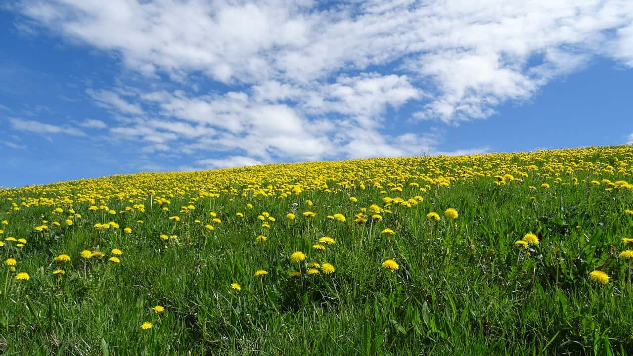 Overcoming Allergies For VO